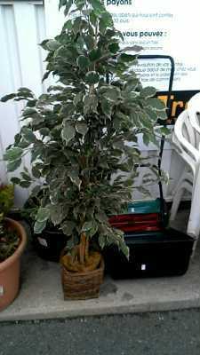Plante d 39 occasion for Cash piscine vaucluse